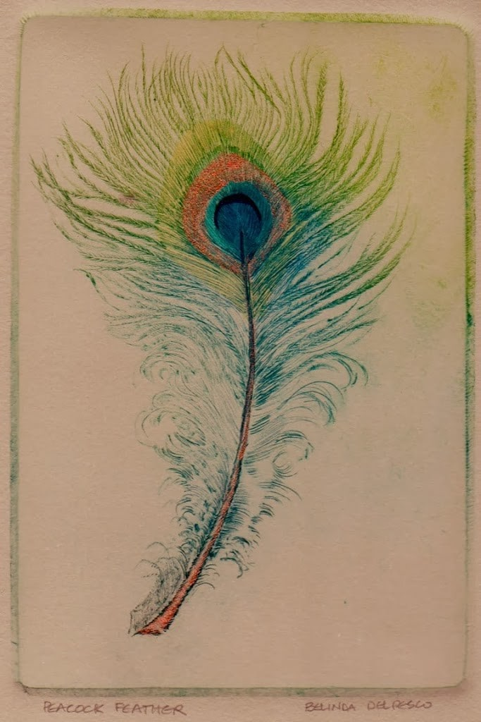 peacock feather drypoint engraving