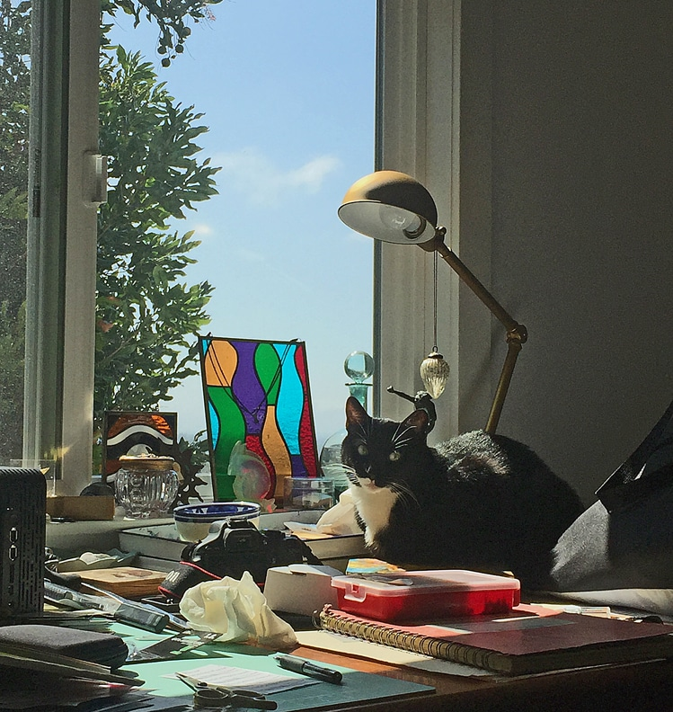 cats-in-the-studio