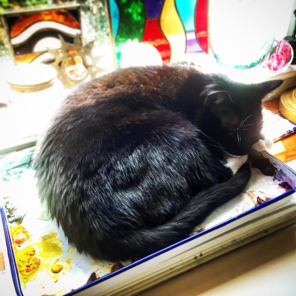 a cat in an art studio