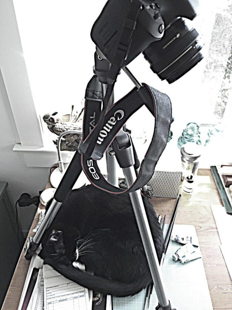 a dslr camera on a tripod pointing down, with a black cat curled up asleep insif=de the three legs of the tripod