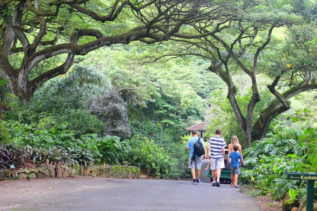 waimea-falls-with-hams-and-clarks