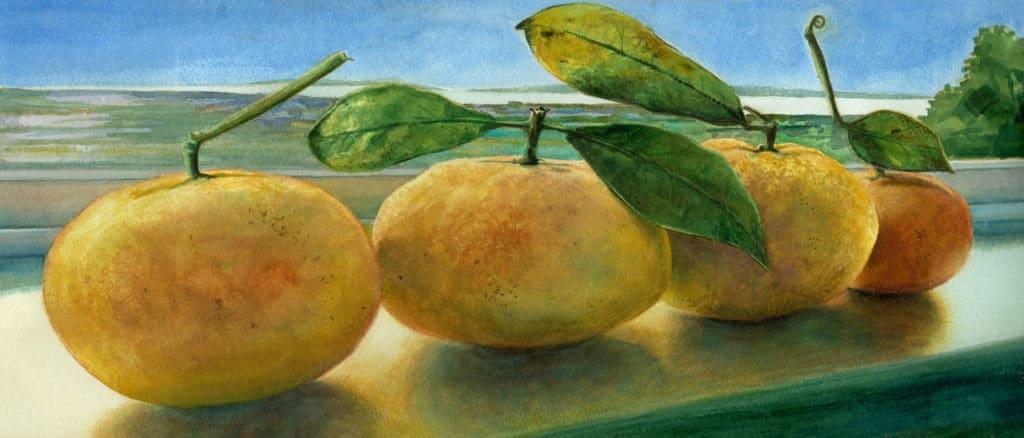 watercolor of grapefruit