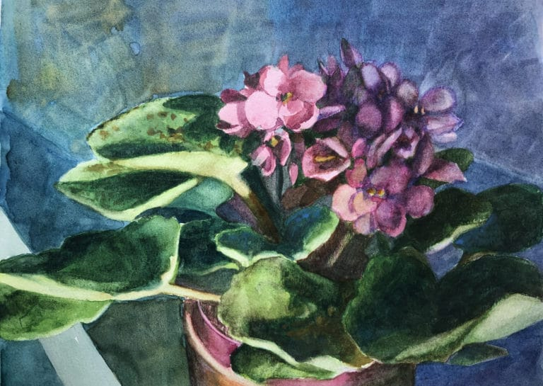 african violets painted in watercolor