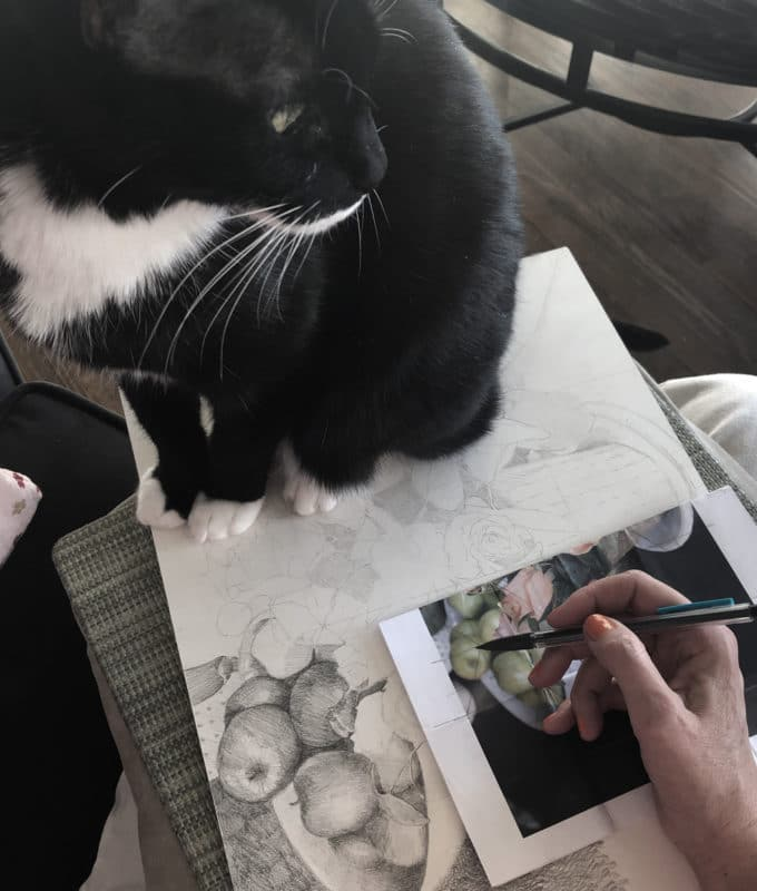 drawing a still life in graphite with a cat on your lap