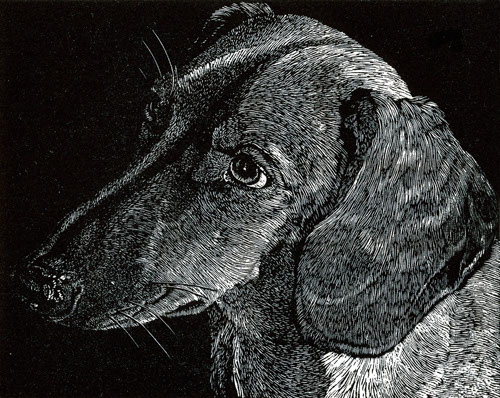 a tiny portrait of a dachsund in black and white wood engraving by James Lorigan