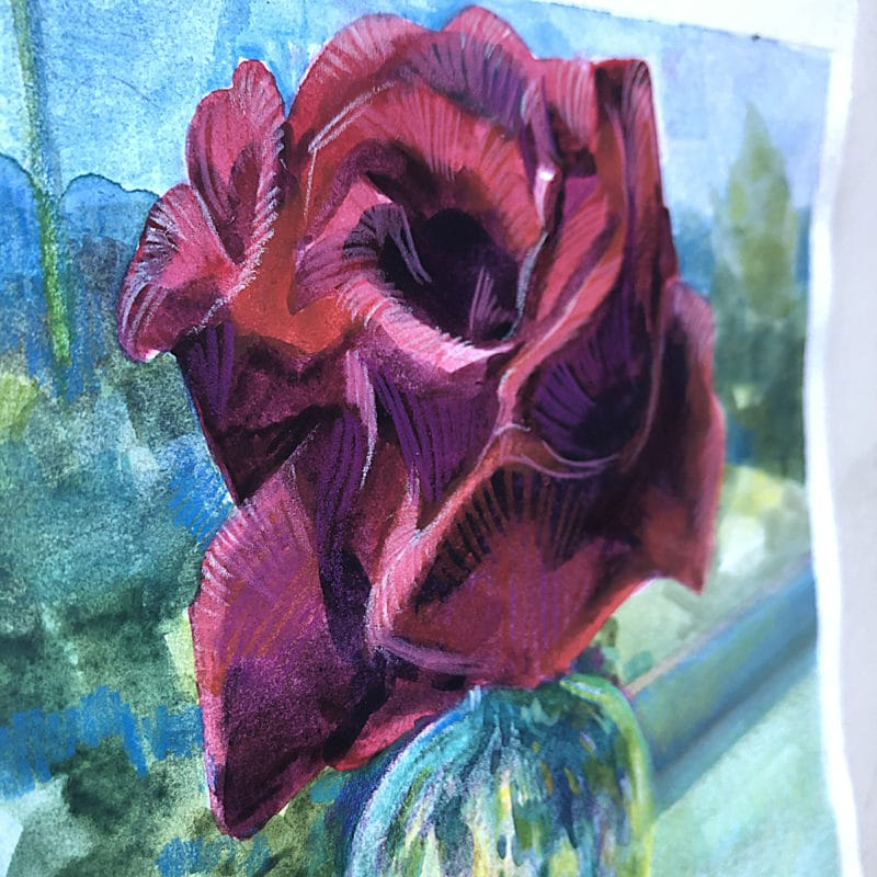 Colored Pencil on a Watercolor illustration of a rose